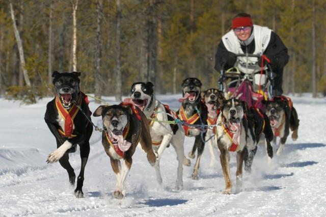 Hege Ingebrigtsen vant VM-gull i hundekjøring. Arkivfoto: Helmut Dietz