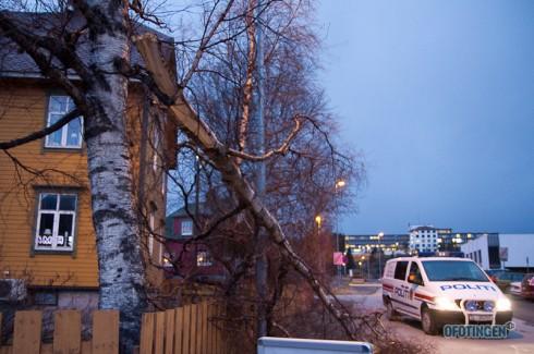 Også et tre måtte gi tapt for stormen. Politiet er på stedet. Foto: Robin Lund