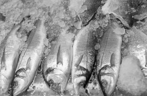 Fikk 5000,- i bot for å smugle 130 kg fisk. Illustrasjonsfoto: CSP