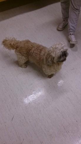 Hittet hund. (Foto: Politiet)